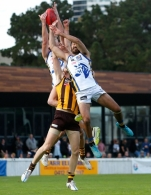 VFL 2015 Cup 2nd Preliminary Final - Box Hill v Sandringham